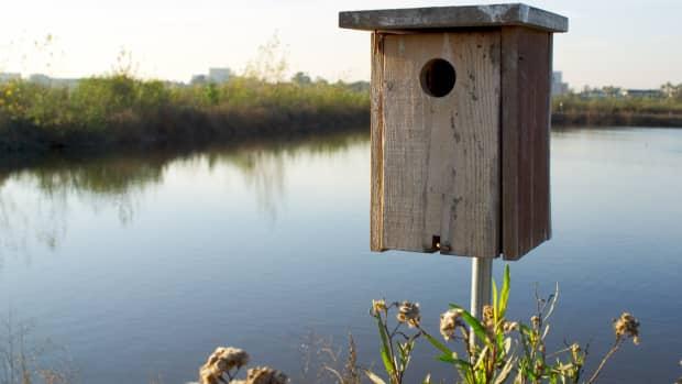 wood-duck-nesting-box
