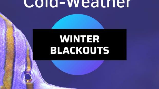 prepare-your-aquarium-for-winter-power-outages