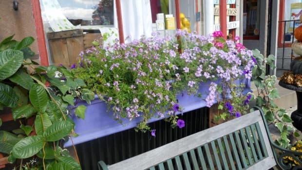 window-box-ideas-for-all-seasons