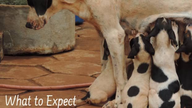 expecting_dogs