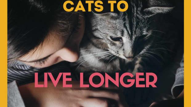 help-your-cat-live-longer