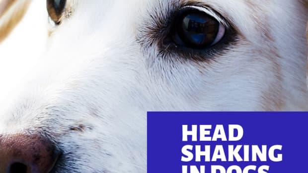 dog-shaking-head-2