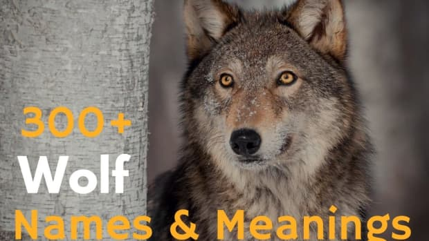 wolf-names