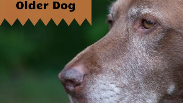 5-reasons-to-adopt-an-older-dog
