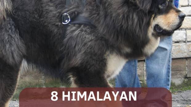most-dangerous-nepali-dogs
