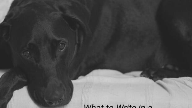get-well-wishes-for-a-pet