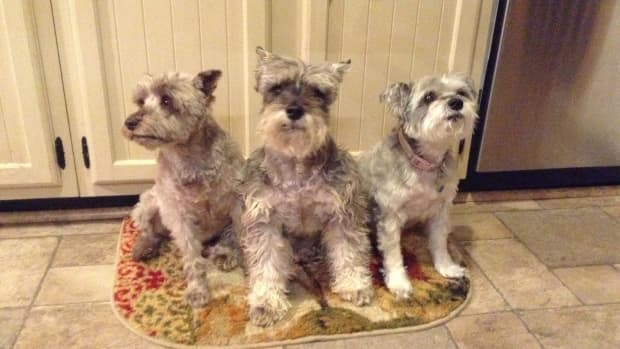 coconut-oil-can-help-dogs-with-allergies