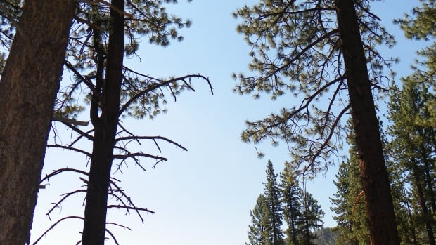 california-camping-grover-hot-springs-state-park