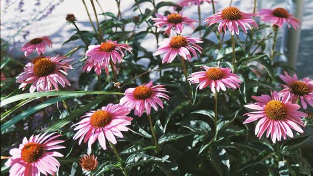 my-adventures-in-xeriscape-gardening