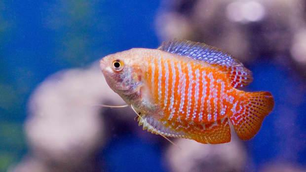 best-aquarium-heater