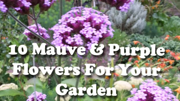 10-mauve-flowers-purple-flowers