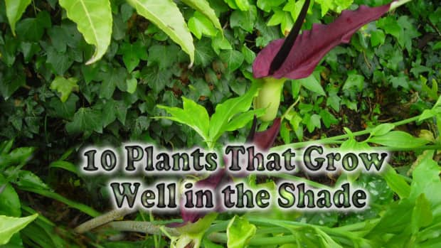 more-plants-grow-shade
