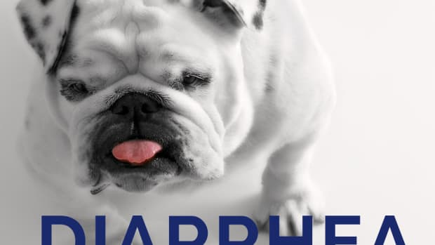 dog-diarrhea