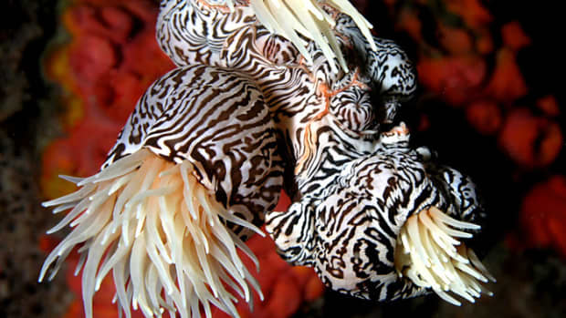 list-of-ocean-animals