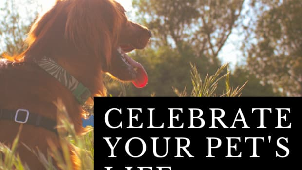 pet-life-celebration-ritual