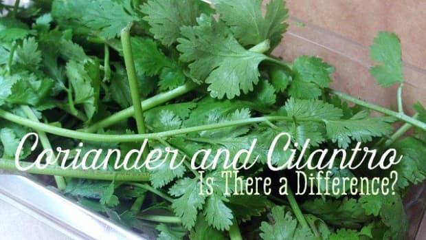 coriander-cilantro