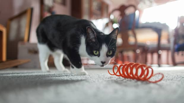 homemadecattoys