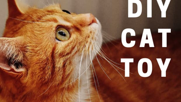 free-toilet-paper-tube-cat-toy