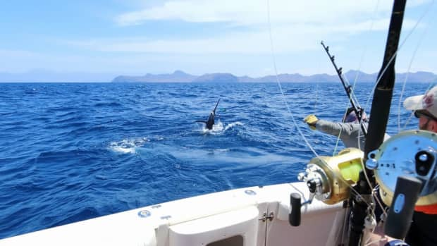 big-blue-101-the-beginners-essential-guide-to-deep-sea-fishing
