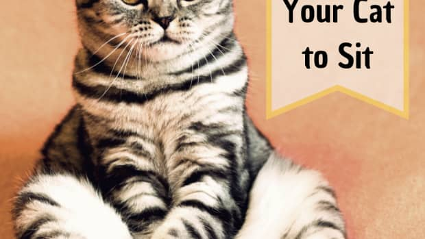 cat-training-how-to-teach-your-cat-to-sit