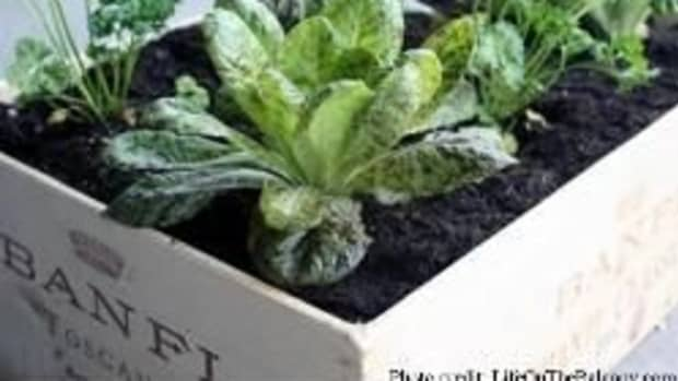 herb-box-container-garden
