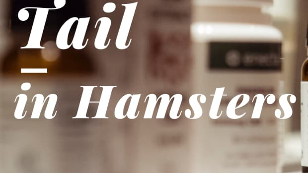 hamsters_with_wettail