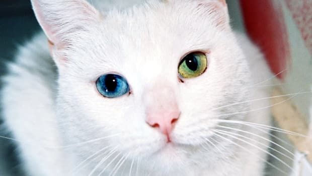 cat-eye-problems