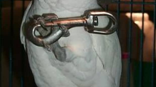 GT holding another failed locking device.