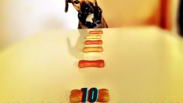 impulse-control-games-for-dogs