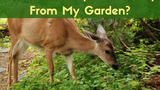 how-i-saved-my-garden-best-deer-deterrent-ever