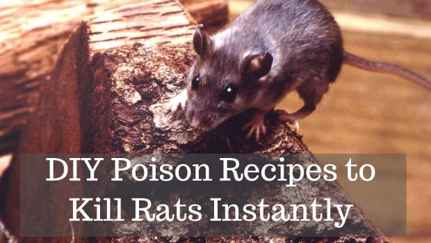 how-to-keep-rats-out-of-a-home-