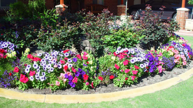 how-to-take-care-of-your-flower-plants
