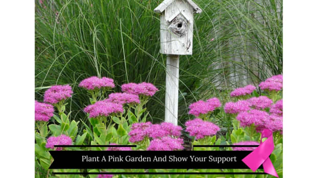 more-than-mums-15-hardy-flowers-for-your-autumn-garden