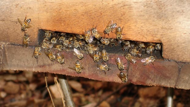 preventing-bees-from-leaving-your-hive