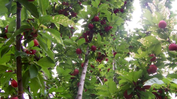 a-few-common-day-fruit-trees