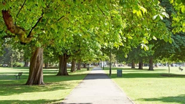 residential-tree-owners-in-ealing