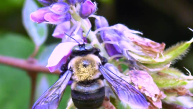 get-rid-of-carpenter-bees