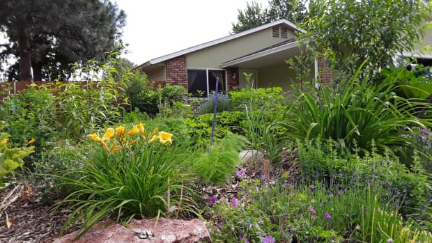 garden-probiotics