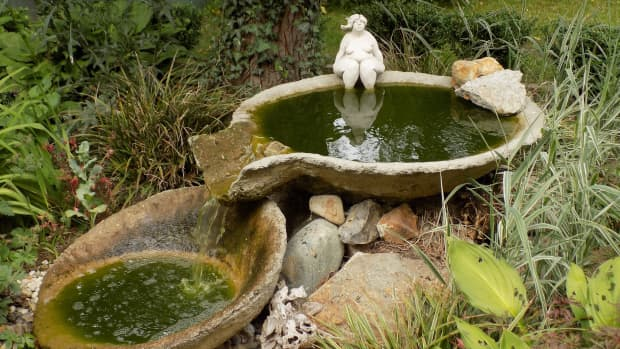 how-to-clean-birdbaths