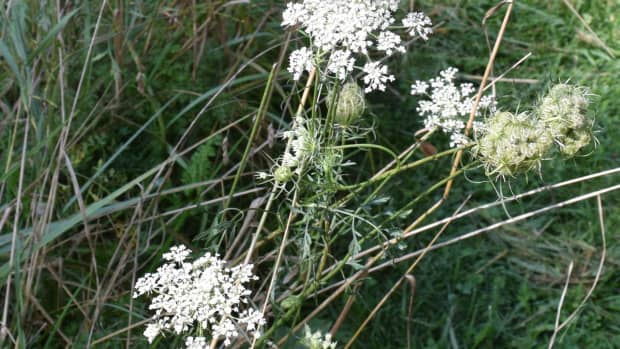 how-to-get-rid-of-weeds-organically