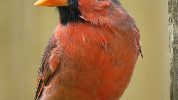 how-to-attract-birds-to-a-winter-garden-party