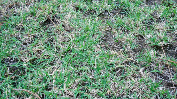 the-benefits-and-detriments-of-crabgrass-in-your-lawn