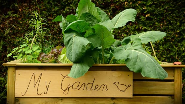 the-best-and-worst-materials-for-building-your-raised-up-garden-beds