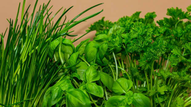 easy-herbs-to-grow-in-the-garden