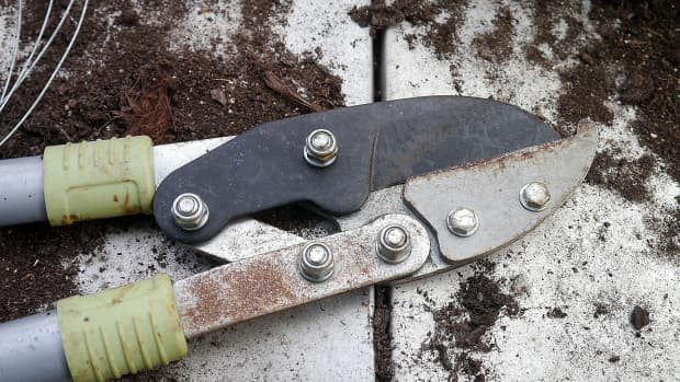 how-to-cut-back-divide-perennials
