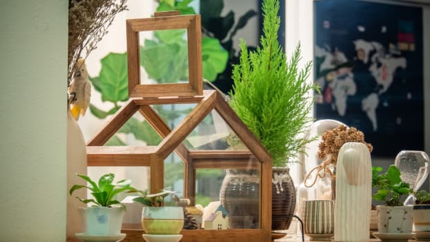 air-cleaning-houseplants-that-are-crazy-easy-maintain