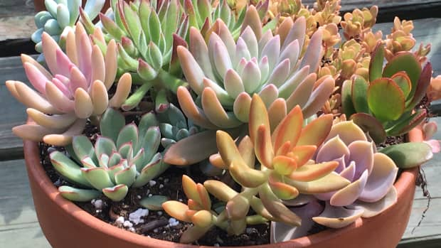 how-to-create-a-succulent-garden