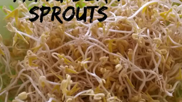 how-to-grow-mung-bean-sprouts