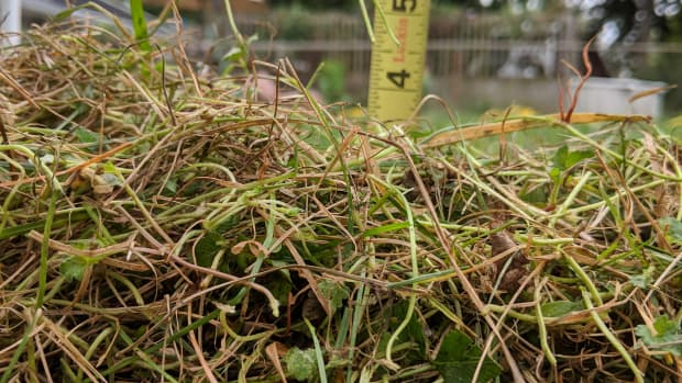 how-to-dethatch-your-lawn