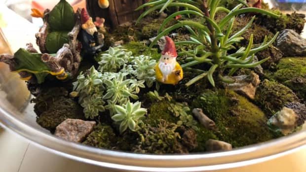 how-to-create-your-own-terrarium